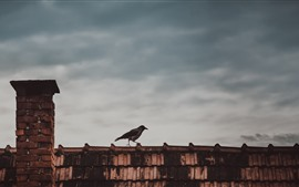 Preview wallpaper Bird, roof