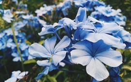 青い花のクローズアップ、花びら