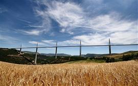 Мост, пшеничное поле