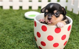Preview wallpaper Cute puppy in the cup