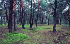 Preview wallpaper Forest, trees, ground, grass