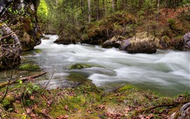 Preview wallpaper Forest, trees, river, water stream, moss