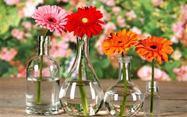 Preview wallpaper Gerbera, flowers, orange, yellow, red, glass bottles