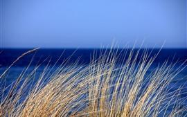 미리보기 배경 화면 잔디, 푸른 바다