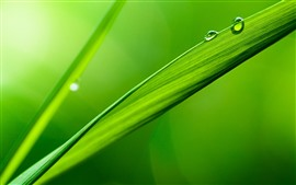 Preview wallpaper Green grass leaf, dew, nature