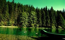 Зеленые деревья, утка, озеро, лодка