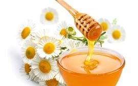 Honey, sweet, white daisy, flowers
