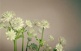 Pequenas flores, caule