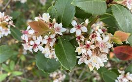 Kleine weiße Blüten, grüne Blätter
