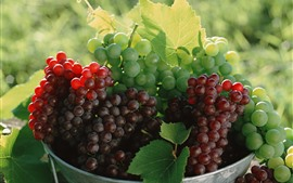 Many green and red grapes, fruit, green leaves