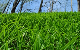 Muitas grama verde, árvores, natureza