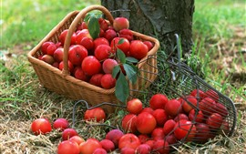 Many red plums, fruit, basket