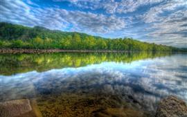 Много деревьев, лес, озеро, отражение воды, небо, белые облака
