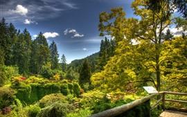 Много деревьев, зелень, природа, площадка