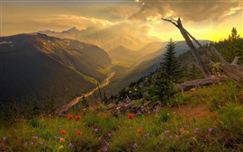Mountains, top, flowers, river, valley, clouds, sun rays, morning