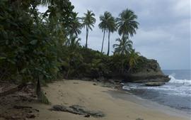 Palm trees, beach, sea, rocks, clouds