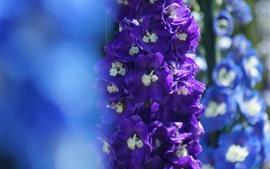 Flores delphinium roxas