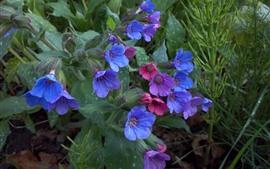 Pequeñas flores rojas, moradas y azules