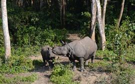 Aperçu fond d'écran Famille de rhinocéros, forêt