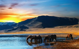 Some horse drink water, lake, mountains