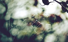 Preview wallpaper Spider web, dew