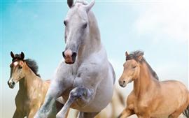 壁紙のプレビュー 実行している3頭の馬、自由