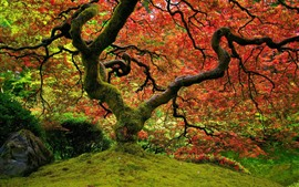 Tree, moss, red leaves, autumn