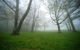 Preview wallpaper Trees, green grass, meadow, morning, fog