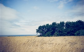 Preview wallpaper Trees, reeds, sea