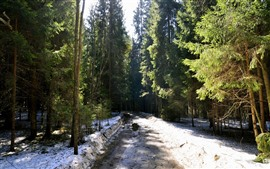 Деревья, дорога, снег, солнце, зима