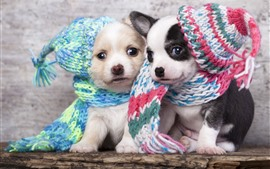 Preview wallpaper Two cute puppies, hats