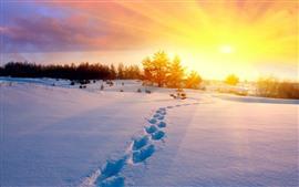Inverno, neve espessa, pegada, raios de sol