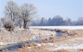 Зима, деревья, трава, снег, зима