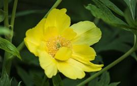 Желтый цветок, лепестки