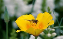Flor de pétalas amarelas, abelha