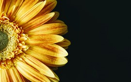 Preview wallpaper Yellow sunflower, petals, black background
