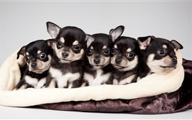 Cute five puppies