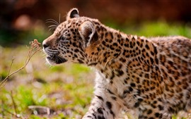 Preview wallpaper Cute jaguar cub, walk