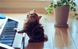 Preview wallpaper Cute kitten play piano