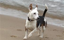 Собака, пляж, море, прогулка