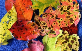 Preview wallpaper Fallen leaves, spots, autumn