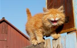 Пушистый котенок, зевок, забор