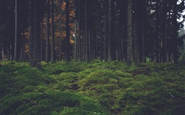 Preview wallpaper Forest, trees, moss, nature scenery