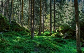 Preview wallpaper Forest, trees, stones, green grass, nature scenery