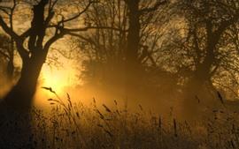 Grama, manhã, nascer do sol, nevoeiro, verão