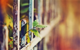 Preview wallpaper Green leaves, fence, hazy