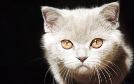 Preview wallpaper Kitten, face, eyes, look, black background
