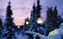 Lamp, trees, snow, winter
