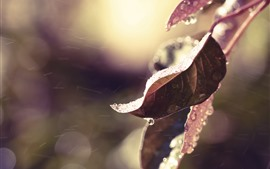 Preview wallpaper Leaves, frost, water droplets, wind