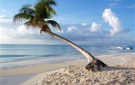 Мальдивы, одинокая пальма, море, пляж